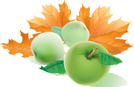 Falling yellow autumn maple leaves fly in the wind and three realistic apples with green leaves isolated on white background, vector illustration. Autumn picture.