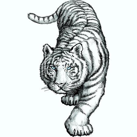 De witte Bengale tijger hangt voor het springen. Vector illustratie.