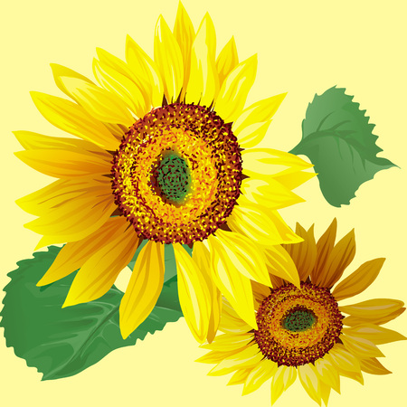 Hand drawn sunflowers with leaves isolated on beige background vector illustration. Çizim