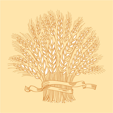 Hand drawn golden ripe wheat sheaf. Vector decorative element, brand icon or logo template.