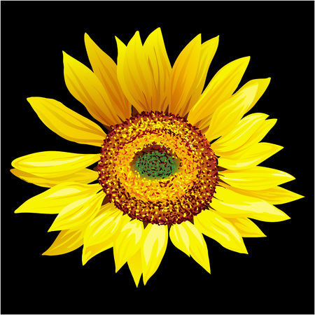 Hand drawn sunflower isolated on black background vector illustration. Standard-Bild - 97354738