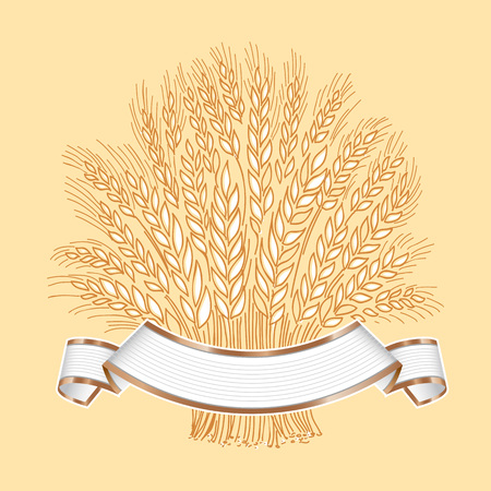 Hand drawn wheat sheaf on white background with white banner banner or logo template. Standard-Bild - 109723229