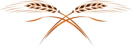 Gold ripe wheat ears, vector. Can be used as frame, corner or corner design element, logo template.