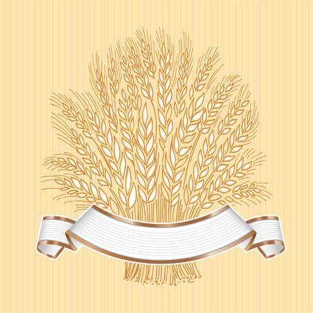 Hand drawn wheat sheaf on white background with white banner banner or logo template. Standard-Bild - 115525457