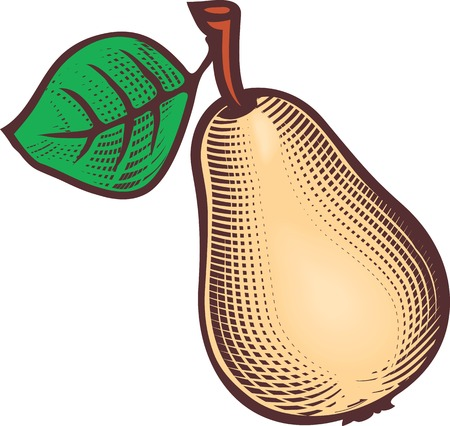 Engraving style hand drawing illustration of ripe pear with green leaf.