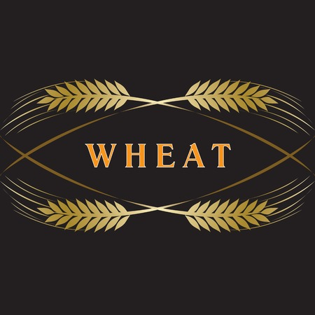 Golden ripe wheat ears on black background. Vector decorative element for label design