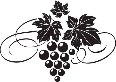 Vector illustration of grape bunch with leaves as wine logo design template.