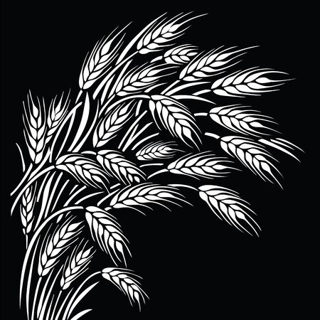 Ripe wheat ears sheaf on black background. Vector illustration, can be used as frame, corner or border element.