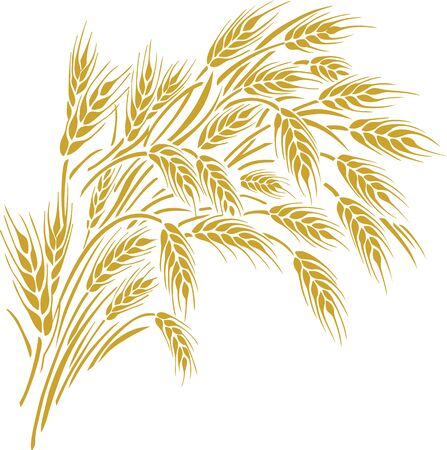 Vector illustration of a few ripe wheat ears. Can be used as frame, corner or border design element. Ilustrace