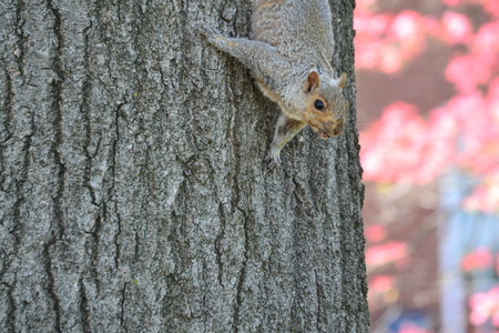 us sizes: squirrel in a tree