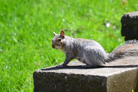 us sizes: squirrel on a rock Stock Photo