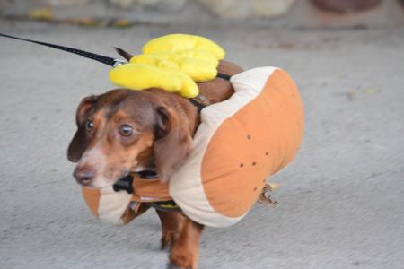 a dog in a costum