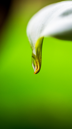 dew on the tip of white flower with green blurred background Stock Photo