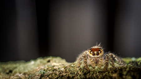 jumping spider crawling on mossy trunk of the wood with blurred background Stock Photo