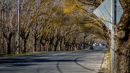 scenic country road surrounded by leafless trees on autumn