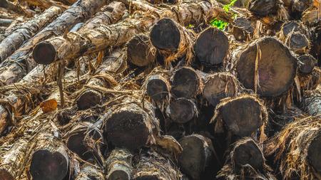 stack of acacia wood / timber in the log yard