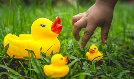yellow rubber duck and ducklings on the grass. Nurture and parenting concept