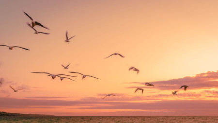 folks of seagulls flying on the sunset sky. nature background