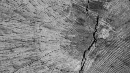 Closeup of old, weathered, cut piece of wood with cracks and abstract pattern
