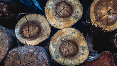 stack of logs of trees. Stock Photo