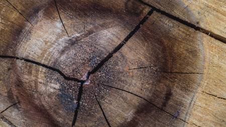 closeup of log. ring of the tree. natural texture background