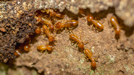 colony of termite Stockfoto