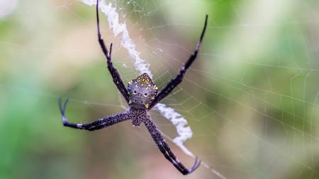 spider in her nest