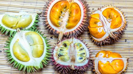different variety of durian fruit that can be found in Borneo, Indonesia.; D. conatus, Durio kutejensis, Durio zibethinus, Durio oxleyanus, Durio dulcis Banco de Imagens