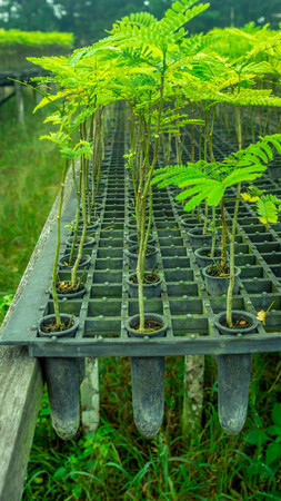 plant seedlings in a nursery. agricultural and nature conservation