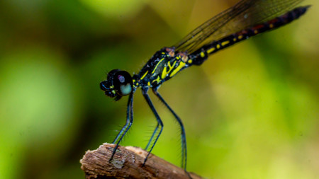closeup of a dragonfly perching on the grass Archivio Fotografico