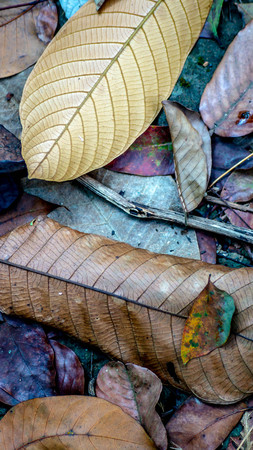 fallen dry leaves on the forest ground. nature and environmental background Stock Photo