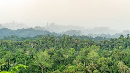 beautiful panorama of hilly dense rain forest in Borneo