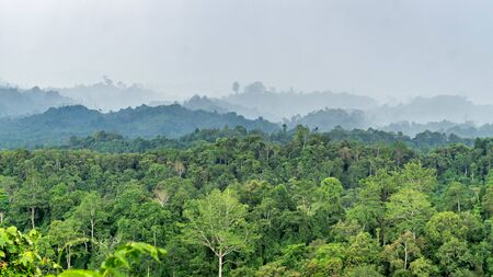 beautiful panorama of hilly dense rain forest in Borneo Stock Photo