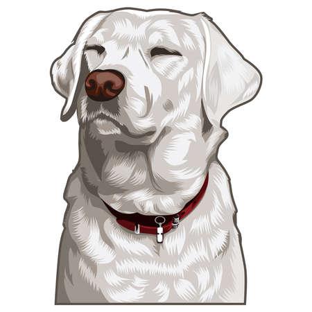 Illustration graphic vector of pet, dog vector illustration. 免版税图像 - 159666313
