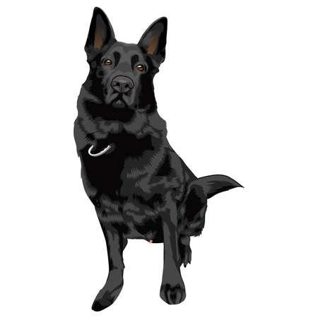 German Shepherd Dog vector illustration.