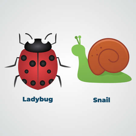 Ladybug or ladybird and Snail Vector illustration.