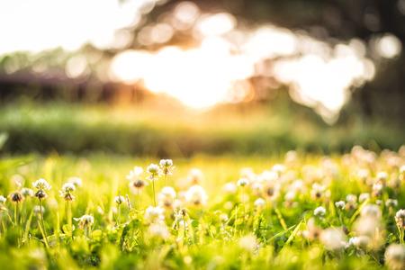 vague: hello evening. hello warm sunlight. Stock Photo