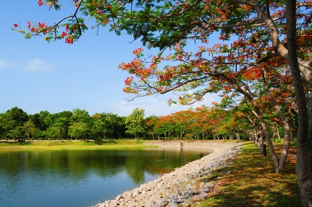 Pond surrounded by  Peacock Crest trees photo