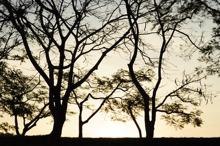 Silhouette Trees before sunset photo
