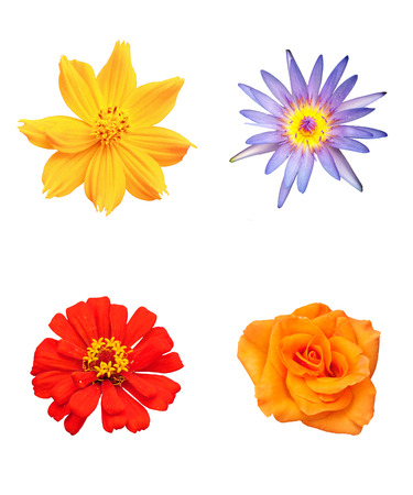 colorful flowers on isolated white background photo