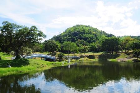 Beautiful landsccape - garden and pond photo