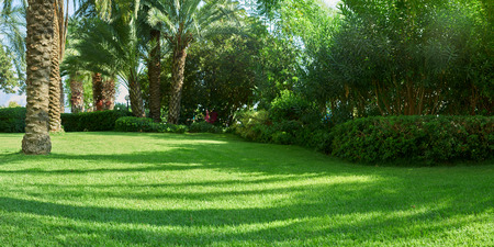 green lawn and palm trees in Turkey