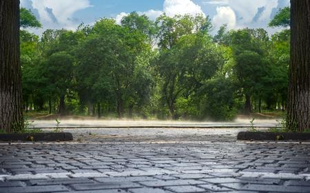 evaporacion: la evaporación después de la lluvia en el parque