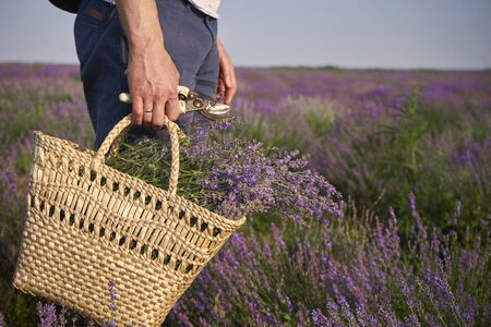 The man picked up a lot of lavender flowers and folded himself in a wicker bag.