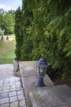 Beautiful vintage metal lantern on the background of juniper trees