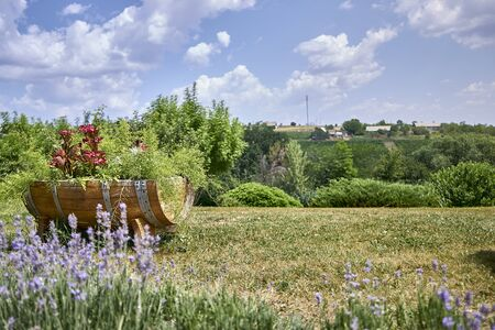 Beautiful flowerbed in a barrel stands on the lawn with a beautiful view of nature