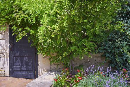 Aged beautiful door