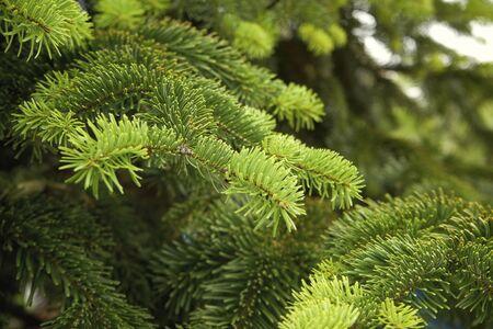 The Beautiful green christmas tree. macro shooting Banco de Imagens
