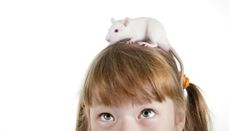 close-up girl with a rat on her head photo