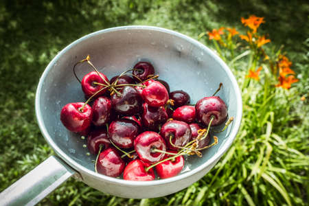 gean: Colander filled with wet Organic cherries in front of green grass background Stock Photo